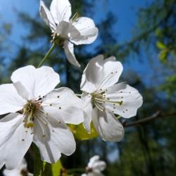 lichtdurchflutete Blüten