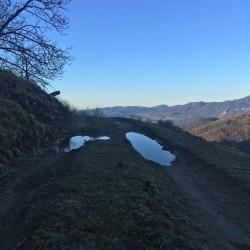 Pfützen auf Waldweg am Morgen