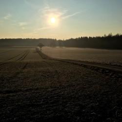 leeres Feld im Winter am Morgen