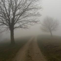 Nebel am Miraveda