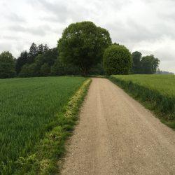 Baum in Bayern