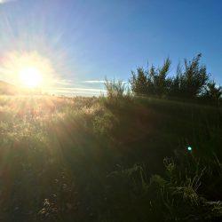 Sonne am Morgen