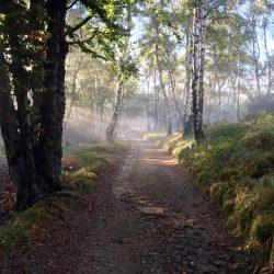 Sonnenlicht am Morgen im Wald