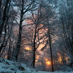 Winter Morgensonne im Wald