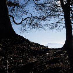 Aussicht zwischen zwei Bäumen
