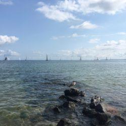 Regatta in der Ostsee