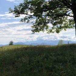 Baum, Wiese und Wolken